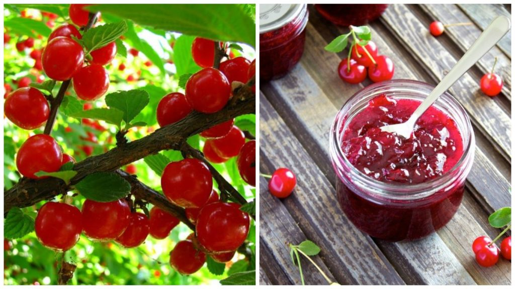 Old Russian cuisine: berry jelly